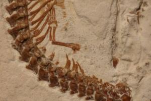 Ihmeiden aika oli 120 miljoona vuotta sitten – Brasiliasta löydettiin nelijalkaisen käärmeen fossiili (800 x 534)