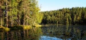 Metsähallitus etsii uutta it-pomoa - konkari siirtyy pääarkkitehdiksi (800 x 372)